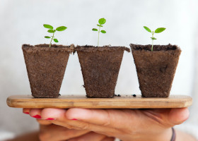 Hands holding three small potted plants
